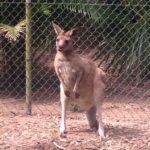 オーストラリア動物園にはもう行った?行き方、料金、営業時間、観光地としての私の評価。