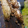 【必見】Hiveの意味や使い方を説明!店名やゲームで使用されるhiveについて教えます!英語の読み方は?スラングだと?